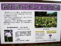 錦大沼ハナショウブ園 - あいのひとりごと