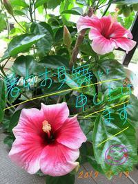 祝★開夏〜♫ - Aloha Kayo-s Style