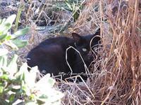 """""""黒猫、見つけた♪@ビーチのにゃんこ♪(=^ェ^=)⑨2017 """" ~ ローマ近郊のビーチから ~ - 『ROMA』ローマ在住 ベンチヴェンガKasumiROMAの「ふぉとぶろぐ♪ 」"""