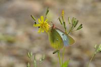 海の日の連休-後半、山上にて- - 蝶と蜻蛉の撮影日記