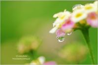 6月の雨の日に*Ⅶ - It's only photo