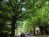 緑の街 - memory
