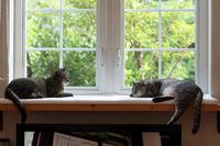窓辺のキキサラ - 小さな森のキキとサラ