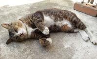 猫たち - FRIED BAND