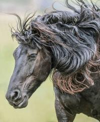 感情のあばれ馬 - 魔女の見習い よもやま歳時記