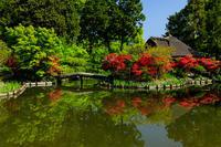 花盛りの梅宮大社・キリシマツツジの頃 - 花景色-K.W.C. PhotoBlog