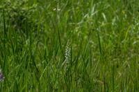 八幡高原の花々の続き - 2005年~2018年デジタルカメラ百台撮り比べ