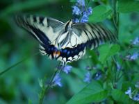 初めて撮ったヤモリ、かさかさした乾燥肌・・・蝶やトンボも・・・加曾利貝塚公園 - 花と葉っぱ