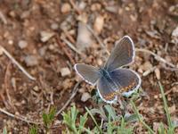 草原の風に翔ぶ蝶を追って(その8) - 不思議の森の迷い人