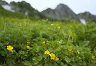 木曽駒・千畳敷カールの花 その3 - 花鳥風景