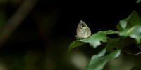 2017 県内の幽谷へ - 紀州里山の蝶たち