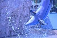下田の旅☆彡下田海中水族館☆彡 - 僕の足跡