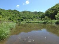 コヤマトンボの羽化 - 加茂のトンボ (トンボ狂会)
