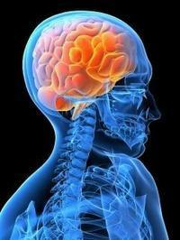 対症療法ではない真のカイロプラクティックとは・・ - アトラスとアクシス Atlas&Axis~Specific Chiropractic&Natural healing power