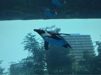 空飛ぶペンギン! - 日だまりカフェ