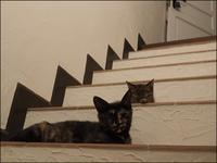 階段が心地いい - L'Ambiance du Midi