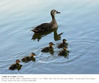 2017.7.15 - 鳥撮り遊び