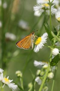 草原周辺の五目撮り - 蝶超天国