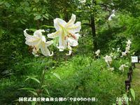 森林公園に「やまゆり」を見に - 比企の郷 月輪紀行