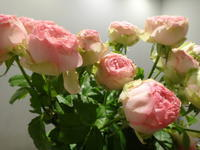 バラを長持ちさせる方法 - ~ Flower Shop D.STYLE ~ (新所沢パルコ・Let's館1F)