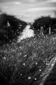 暮れゆく川面の光と共に-2 - Korze Photolog