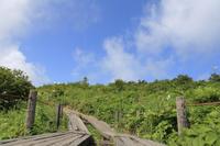 八島湿原 - ecocoro日和
