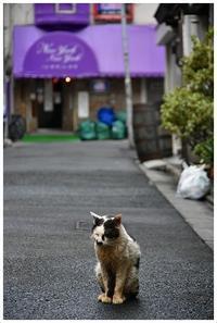 上野広小路の猫 -  one's  heart