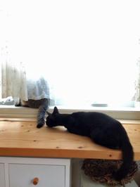 保護猫の記録⑥ - 小さな森のキキとサラ