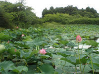 低地の沼にて - 蝶と蜻蛉の撮影日記