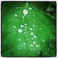 梅雨時のアロマ - こころ☆からだ 感じるアロマ