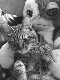宇宙との交信!トラちゃんの2017年8月占い(物の怪横行日のご説明) - 猫丸ねずみの大荒れトーク