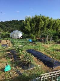 超絶ミニ農園の現在 - 熊野町民 超絶・翔平!のぶらり外出録(たまに写真だけ)