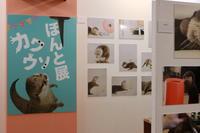 【カワウソ ほんと展/TODAYS GALLERY STUDIO】 - うろ子とカメラ。