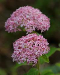 箕輪城跡で花とチョウ - 星の小父さまフォトつづり