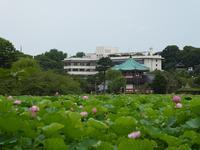 蓮の花がきれいだよ、上野の不忍池♪そして餃子の昇竜♪ - ルソイの半バックパッカー旅