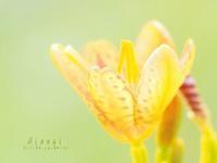 檜扇 - HAIKU/ spring PHOTO