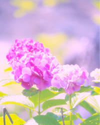 大切にしていることを意識して過ごす - 神戸市垂水区 Petit Lapin~プチ・ラパン~