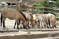 今年生まれた3頭の仔馬 - 動物園放浪記