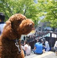 代々木公園 タイ フェスティバル 2010♪ - shoot !!
