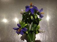 新しく鉢物が入荷しました - ~ Flower Shop D.STYLE ~ (新所沢パルコ・Let's館1F)