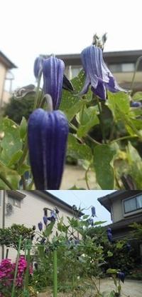 お花&ペット - 花・ペット&見て歩き遅まきブログ