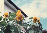 web版37紫野茜さんへ by 前野育三 - 海峡web版