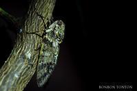 割と謎な生物 - ぼんぼんトントン 写真
