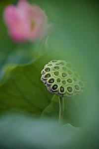 花より果托 - 四季の予感