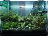 キューバパール水槽改めニューラージ水槽 - 癒しのアクアライフ
