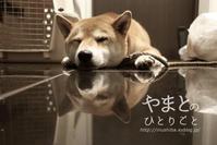 玄関で寝る犬 - yamatoのひとりごと