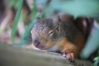 木陰でお昼寝 - 動物園のど!