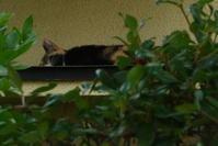 三毛猫ひかちゃん -57- - 殿様の試写室