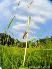 風に吹かれて - kawanori-photo