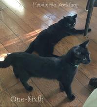 猫たちの夏休みとドールハウス - ドールハウス 手作り夢工房